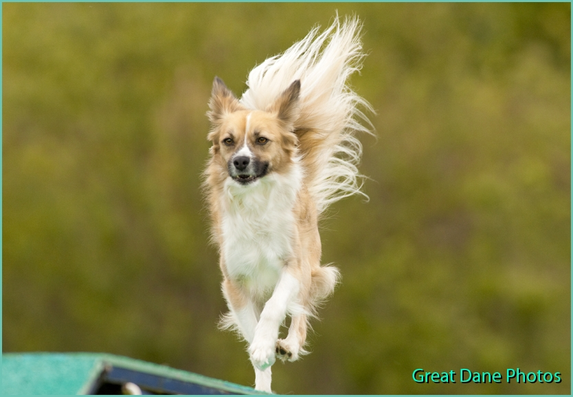Agility Dog Shows In Minnesota